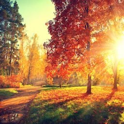 Training in Autumn is beautiful and there is still plenty of light